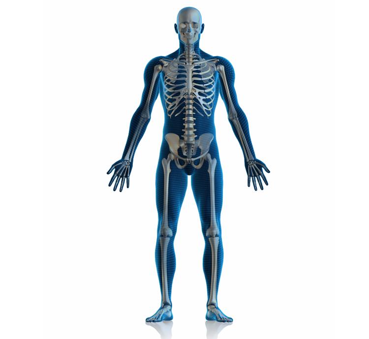 Skeletal System Powerknowledge Life Science